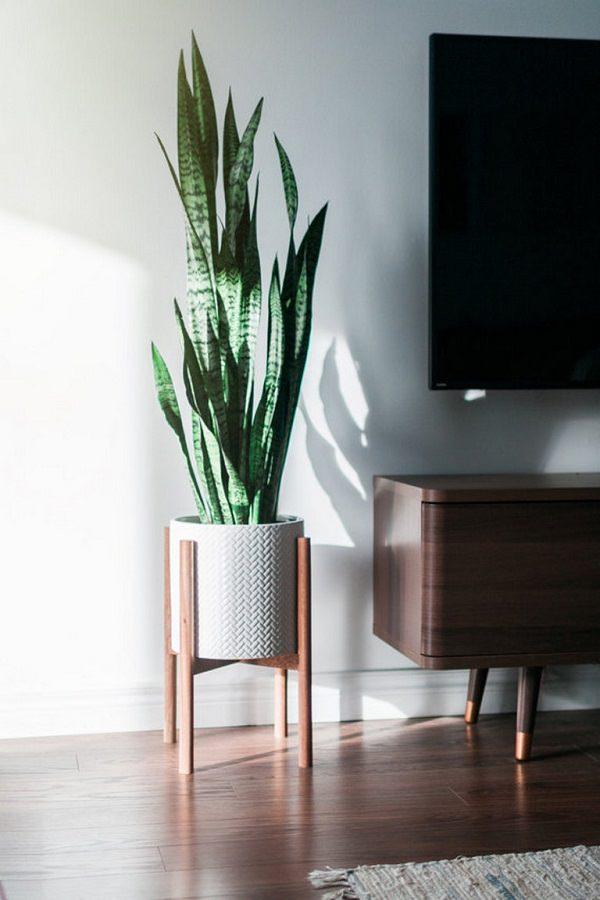 17 id es de plantes qui poussent sans lumi re du soleil chasseurs d 39 astuces. Black Bedroom Furniture Sets. Home Design Ideas