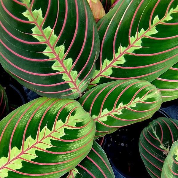 17 id es de plantes qui poussent sans lumi re du soleil for Plante qui aime l ombre