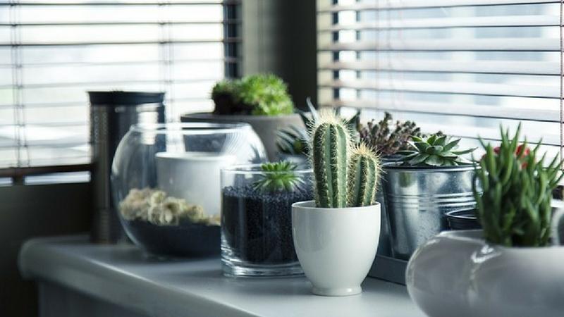 17 Idées De Plantes Qui Poussent Sans Lumière Du Soleil Chasseurs