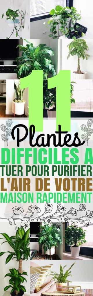 11 plantes g niales pour purifier l 39 air de votre int rieur. Black Bedroom Furniture Sets. Home Design Ideas