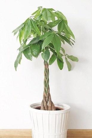 11 plantes g niales pour purifier l 39 air de votre int rieur. Black Bedroom Furniture Sets. Home Design Ideas