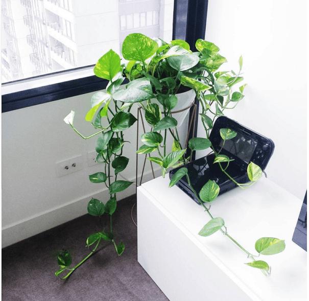 11 plantes g niales pour purifier l 39 air de votre int rieur - Plante qui purifie l air ...