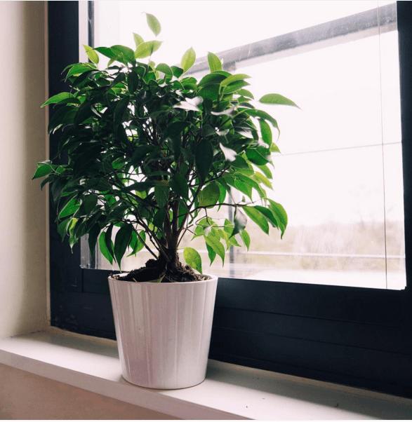 11 plantes g niales pour purifier l 39 air de votre int rieur for Plante pour interieur