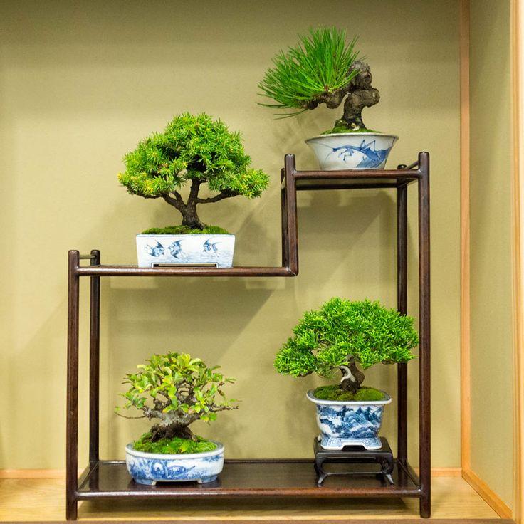 9 plantes parfaites pour votre chambre. Black Bedroom Furniture Sets. Home Design Ideas