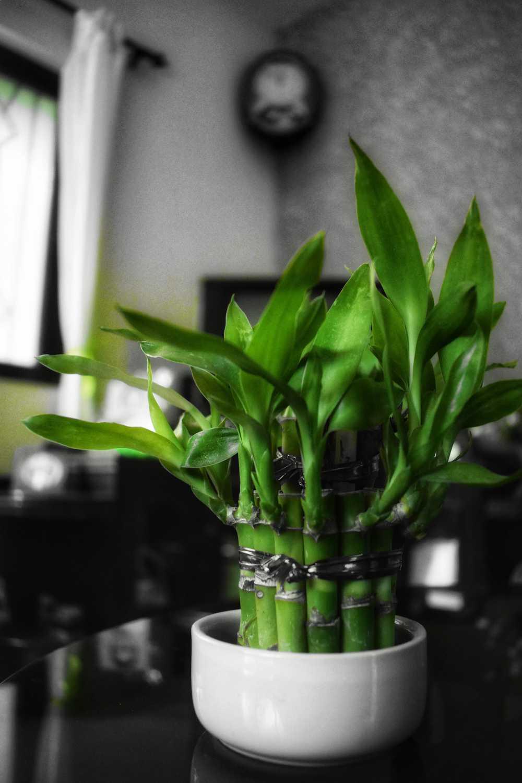 20 Plantes Parfaites Pour Salle De Bain Qui Poussent Avec Peu Pas