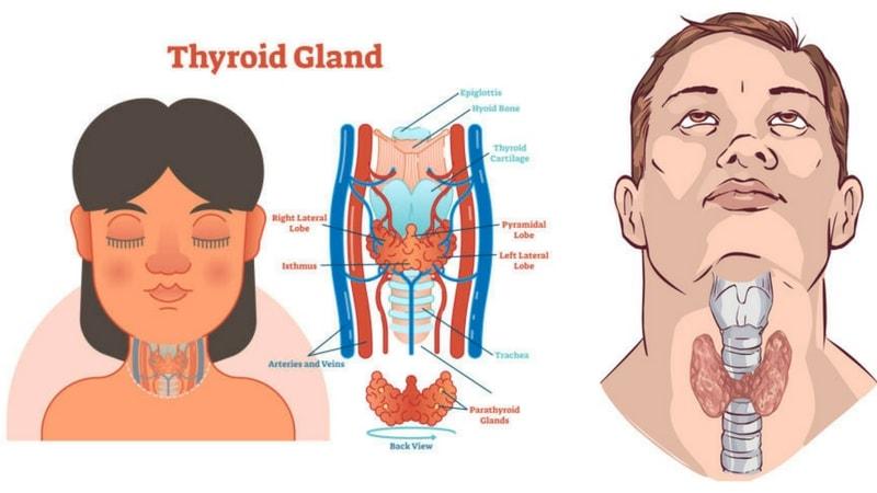 Guide En 6 étapes Pour Perdre Du Poids Avec Une Hypothyroïdie